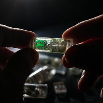 The Ingestible Bacterial-Electronic Sensor
